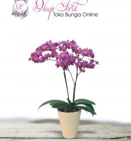 bunga-meja-anggrek