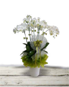 bunga-meja-anggrek-bulan-jakarta
