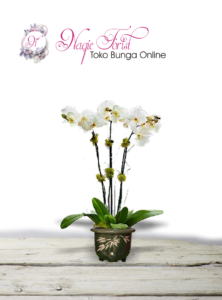 jual-bunga-anggrek