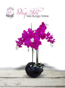 jual-anggrek-online-murah