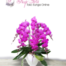 bunga-anggrek-bulan-6-tangkai