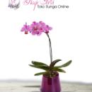 bunga-anggrek-ungu