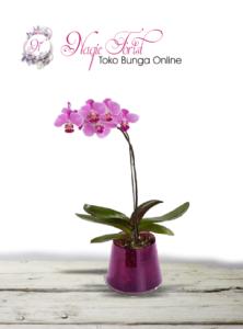 bunga-anggrek